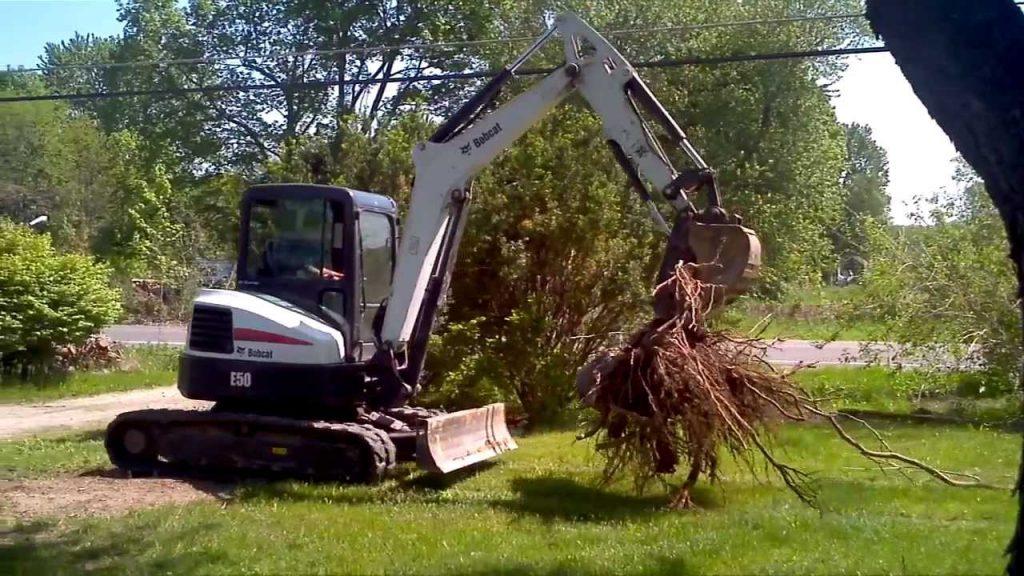 Tree Removal Excavation
